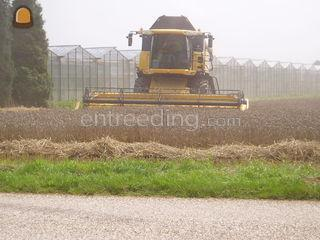 new holland Omgeving Venlo