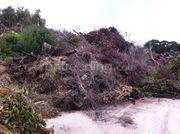 stort groenhout