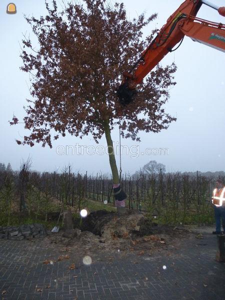 Bomen verplanten