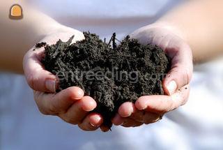 Groencompost Omgeving Hilversum