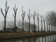 Hovenier ervaren boomverzorger