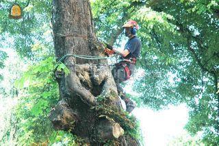 boomklimmers Omgeving Den Haag