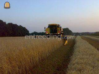 New Holland TC 5070 Omgeving Hilversum