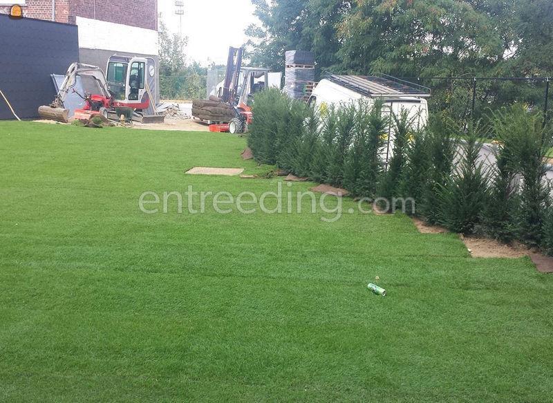 tuin, gazon, begrondingen, omheiningen