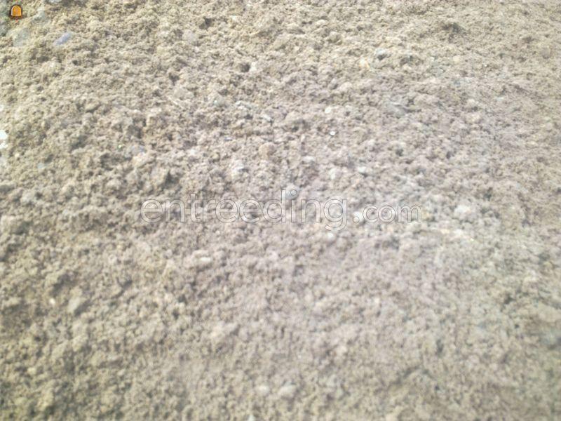 Grond Zandgrond