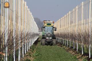 Bemesting van boomgaarden Omgeving Tiel