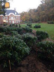 Groenaanleg, onderhoud en... Omgeving Haarlem